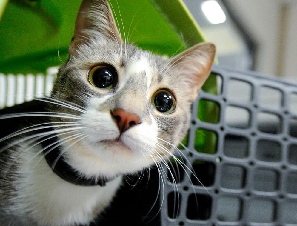 Акции ко Всемирному дню домашних животных пройдут в столице. Фото: официальный сайт мэра Москвы